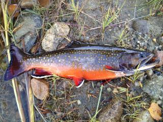 Łowienie w wędkarskiej dziczy